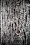 Old wood background Stock Photography