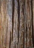 Old wood. Wood surfaces coated with polyurethane Stock Image