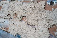 Old wood with termite damage.  stock photos