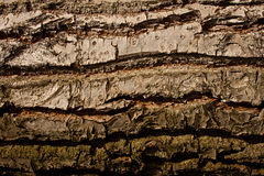 Old wood texture. Horizontal close up Royalty Free Stock Images