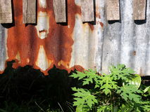 Old wood texture align with rusty metal and green plants Royalty Free Stock Image