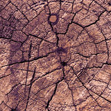 Old Wood texture antique cross section background or texture, br Stock Photography