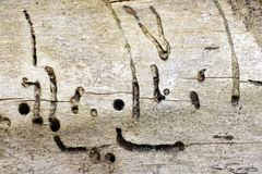 Old wood texture attacked by woodworm Royalty Free Stock Images