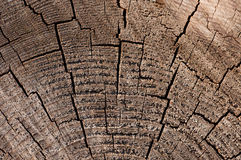 Old wood texture (for background) Royalty Free Stock Image