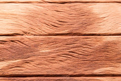 Old wood texture. Royalty Free Stock Image