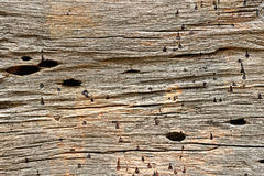 Old Wood Texture Background, Stock Photography