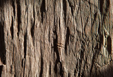 Old wood texture for background. Old rough wood texture illuminated by the sun for the background Stock Images