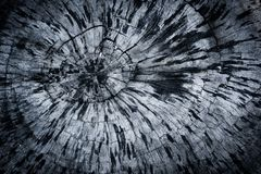 Old wood texture background tree rings old wood texture stock image