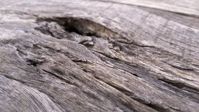 Old wood texture for background. Vintage background from a wooden horizontal shabby plank. Focus selection. Selective focus stock image