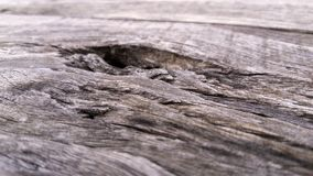 Old wood texture for background. Vintage background from a wooden horizontal shabby plank. Focus selection stock images