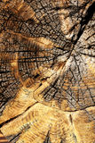 Old wood texture close-up stock photos