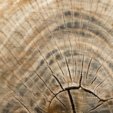 Old wood texture close up Stock Image