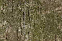 Old wood texture coverd with green moss. Old wood texture coverd with green moss stock photos