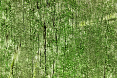 Old wood texture coverd with green moss. Old wood texture coverd with green moss royalty free stock image