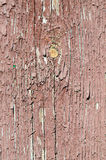 Old wood texture with cracked paint. The old wood texture with cracked paint stock image