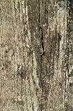 Old wood texture cracked with peeled white paint Stock Image