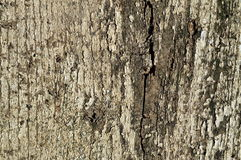 Old wood texture cracked with peeled white paint Stock Photo
