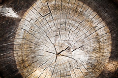 Old Wood texture of cut tree trunk Royalty Free Stock Photos