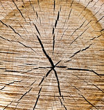 Old Wood texture of cut tree trunk Royalty Free Stock Images