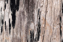 Old wood texture. Royalty Free Stock Photography