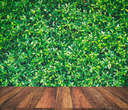 The old wood texture and green leaf background Royalty Free Stock Photos