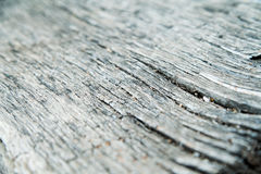 Old wood texture. Grey background. Old wood texture. Grey, nature, tree Stock Image