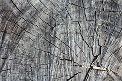 Old wood texture. Old wood texture grey vintage Royalty Free Stock Image