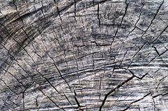 Old wood texture. Old wood texture grey vintage Stock Photo
