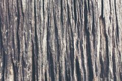 Wood texture Dead tree surface royalty free stock photos