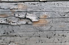 The old wood texture with natural patterns. Inside the tree background. Old grungy and weathered grey wooden wall planks texture b Royalty Free Stock Photos