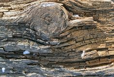 The old wood texture with natural patterns. Inside the tree background. Old grungy and weathered grey wooden wall planks Royalty Free Stock Images