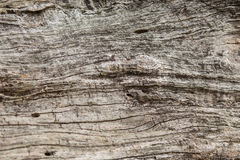 Old wood texture, Natural wood surface, ideal for backgrounds Stock Images