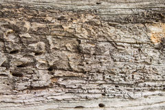 Old wood texture, Natural wood surface, ideal for backgrounds Stock Photography