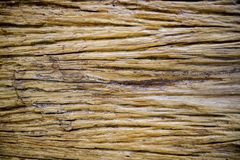 Old wood texture. Background stock photo