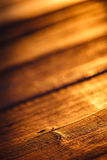 Old wood texture in sunset light. Old wood scratched surface in gold light of sunset with macro details Royalty Free Stock Photography