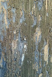 Old wood texture. Vintage wood background with peeling paint Stock Photos