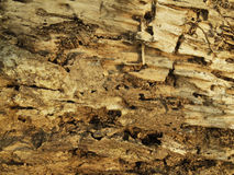 Old wood texture that is weathered Royalty Free Stock Photos