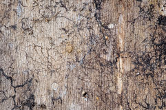 Old wood texture for web background Royalty Free Stock Images