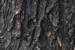 Old wood textures. Skin tree look like old Stock Photo