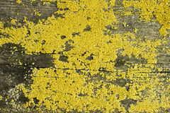 Old wood top cover lichen organic texture Stock Photo