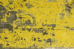 Old wood top cover lichen organic texture Stock Photos