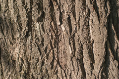 Old Wood Tree bark Texture Background Pattern.  horizontal image.  Royalty Free Stock Images