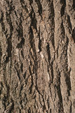 Old Wood Tree bark Texture Background Pattern.  vertical image. Old Wood Tree bark Texture Background Pattern. vertical image Royalty Free Stock Image