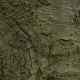 Old wood tree bark texture Stock Images