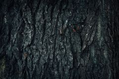 Old wood tree bark texture with green moss Stock Image
