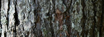Tree barkTexture Background Pattern. Relief texture of the brown bark of a tree with moss on it. Horizontal banner photo stock photos