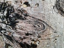 Old Wood Tree dry Texture Background Stock Photos
