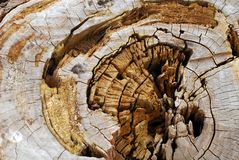 Old wood tree rings background Royalty Free Stock Photo
