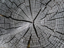 Old Wood Tree Rings Texture Stock Photos