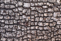 Old Wood Tree Texture Background  bark Pattern Stock Photos